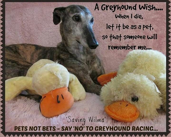 A #greyhound wish: &quot;When i die let it be as a pet&#39; #PetsNotBets  Say #No to #GreyhoundRacing   https:// m.facebook.com/GreyhoundAware nessCork/posts/472824766450592 &nbsp; … <br>http://pic.twitter.com/bhC2DicfZt