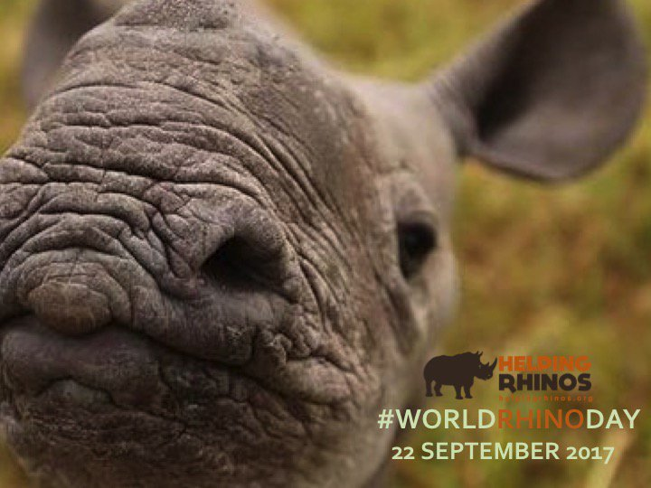Don't forget the little guys this #WorldRhinoDay https://t.co/TP7unbhp...