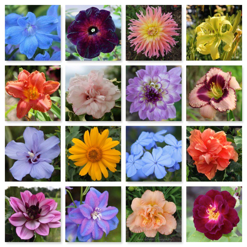 #LastDayofSummer so reflecting on some of my favorite #garden beauties from this season  It truly was a colorful one <br>http://pic.twitter.com/mnQO9fYPPQ