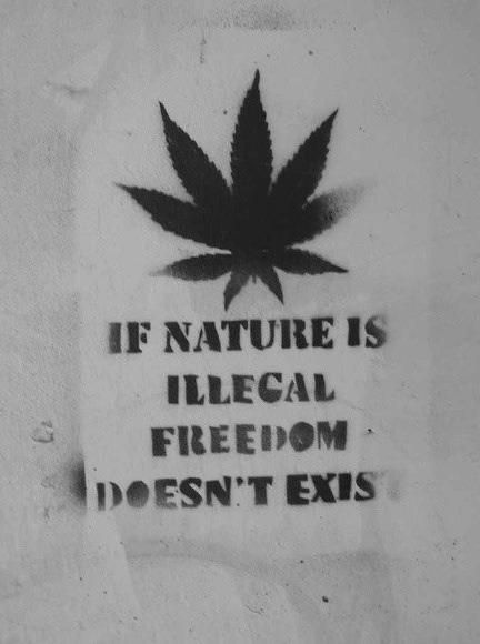 Does Freedom exist? #weed #cannabid #marijuana #bong #blunt #herb #THC #indica #sativa #weedInfo #cannabisInfo <br>http://pic.twitter.com/ffMIpSgJ4g