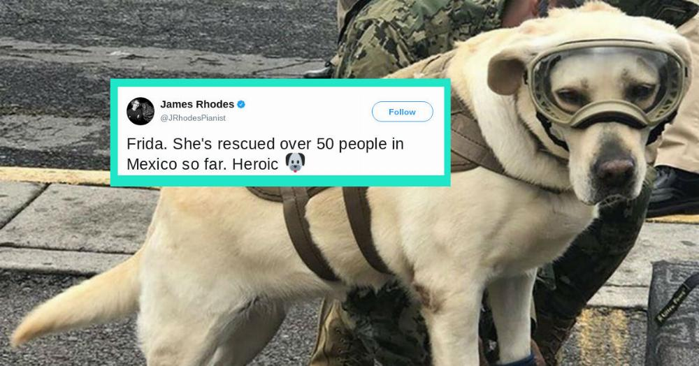 A rescue dog who's saved dozens of lives in Mexico is Twitter's most adorable hero. https://t.co/oPEfiJiRGP
