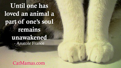 You&#39;ll know how this feels if you have a special relationship with #animals. They are vitally important. #pets #loveanimals <br>http://pic.twitter.com/rCr3nPnCB5
