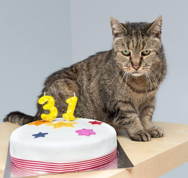 >@Emais_Estadao Gato mais velho do mundo morre aos 32 anos  https://t.co/OSfA7f7UIw