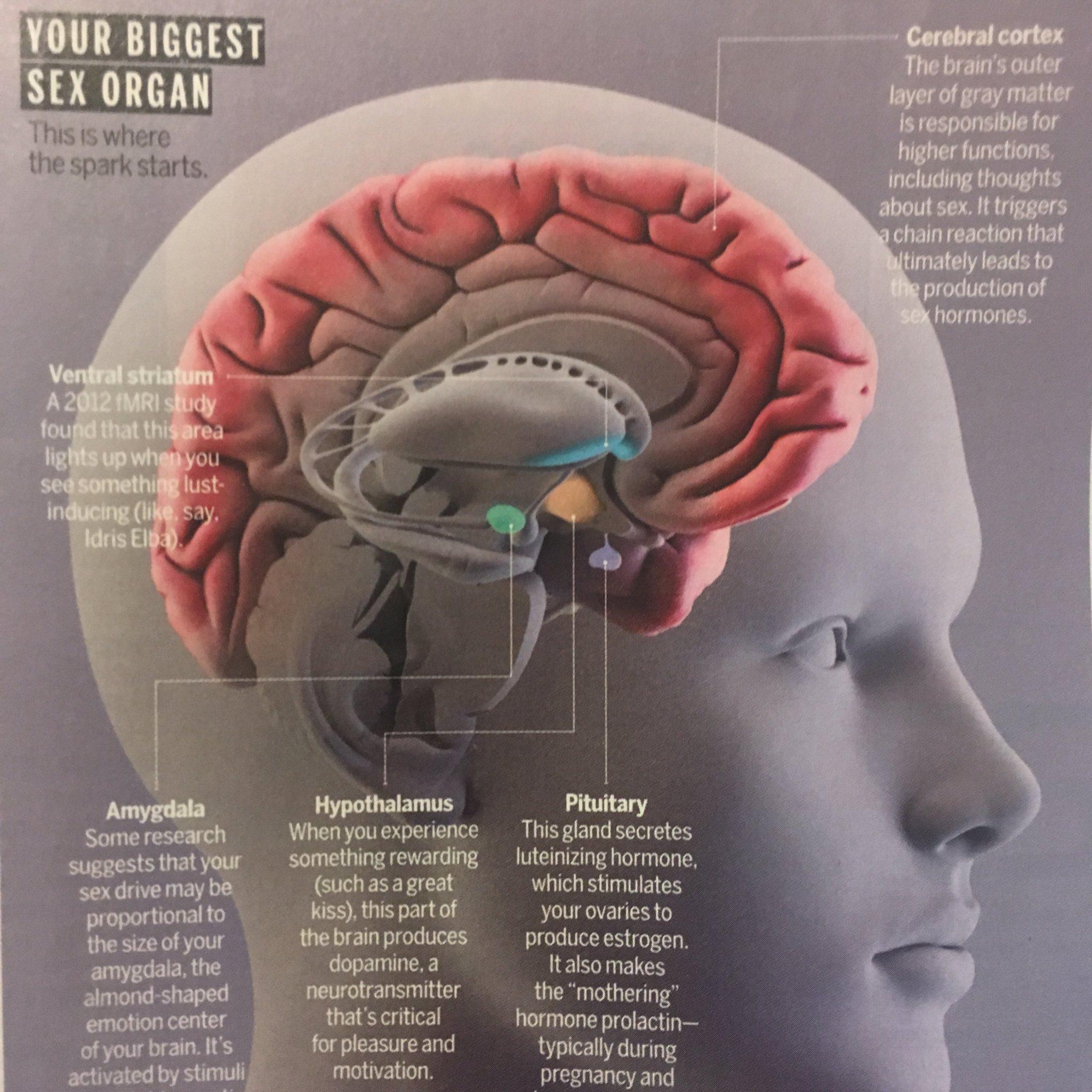 Cerebral sex — img 12