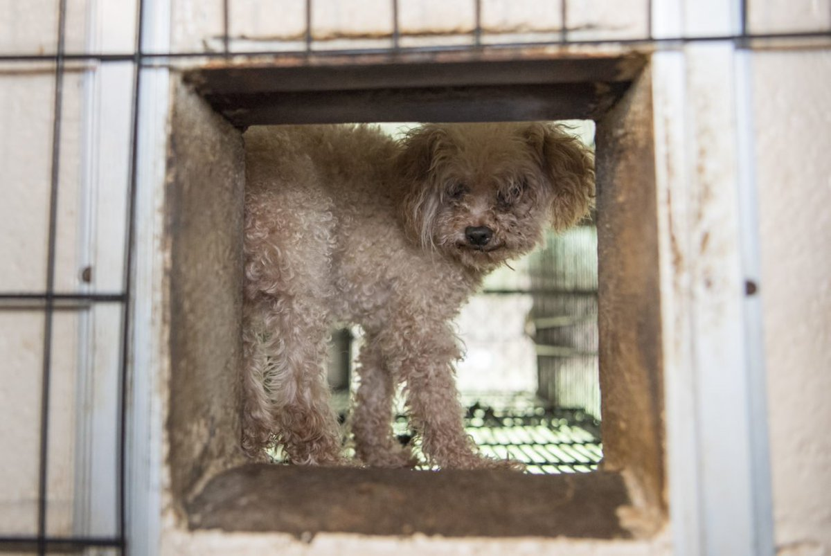 #California will enact a law to ban the sale of #puppymill dogs in pet stores! <br>http://pic.twitter.com/QZ9yyIpQj6