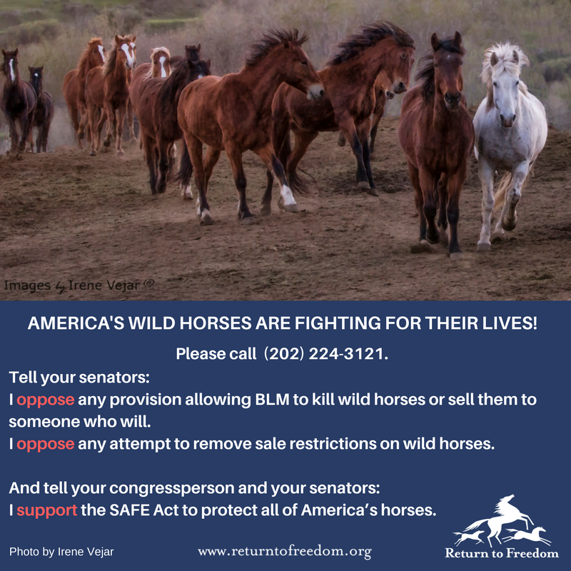 The Senate Appropriations Committee may act as soon as next week. Call today. Urge your senators to protect America&#39;s #wildhorses. <br>http://pic.twitter.com/UnR9HsTCV8