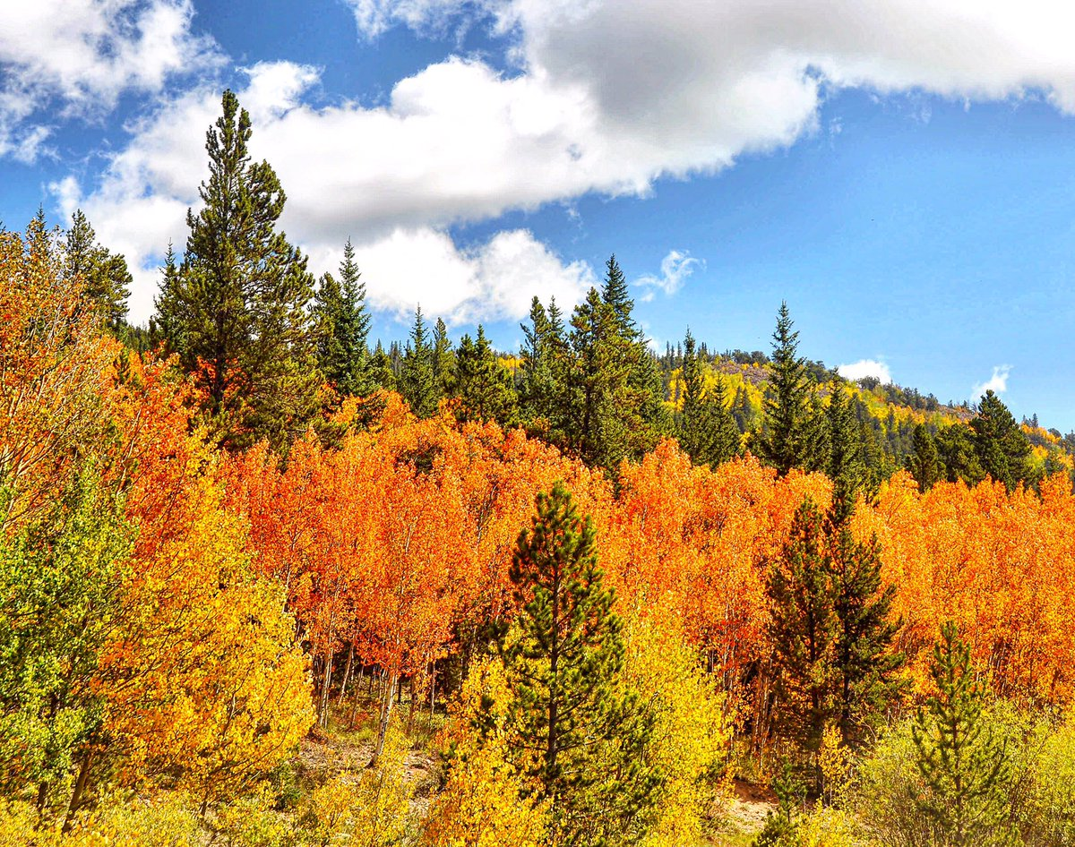 Fall color bursting everywhere #autumn #colorfulcolorado #letsplayinstead #vanlife #ontheroad #Wanderlust #travel #aspen @Colorado<br>http://pic.twitter.com/rIM5W4GYtj