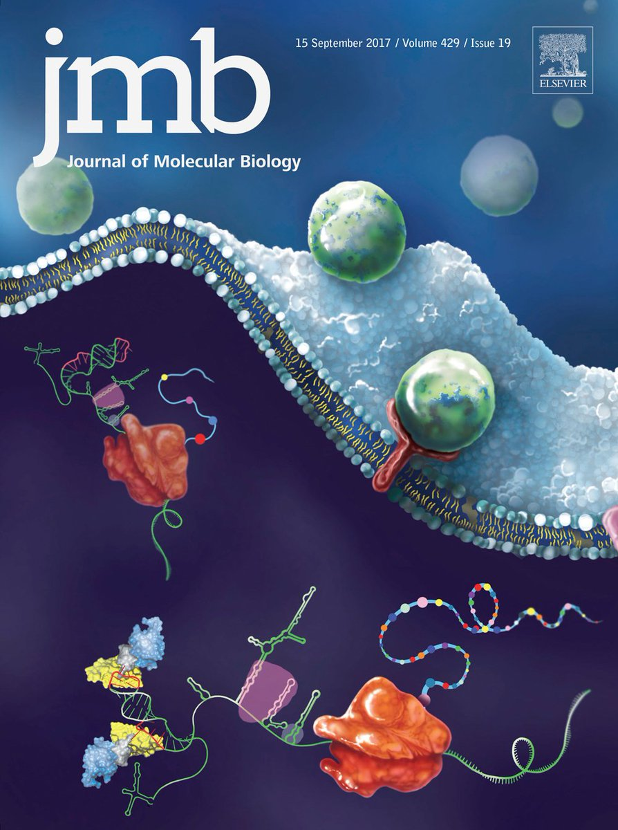 amazing work coming from #cwruchemistry   #tolbertgroup work featured on @JMolBiol cover:  http:// bit.ly/2hj2Cvd  &nbsp;    #researchspotlight <br>http://pic.twitter.com/QsXy3S5nZV
