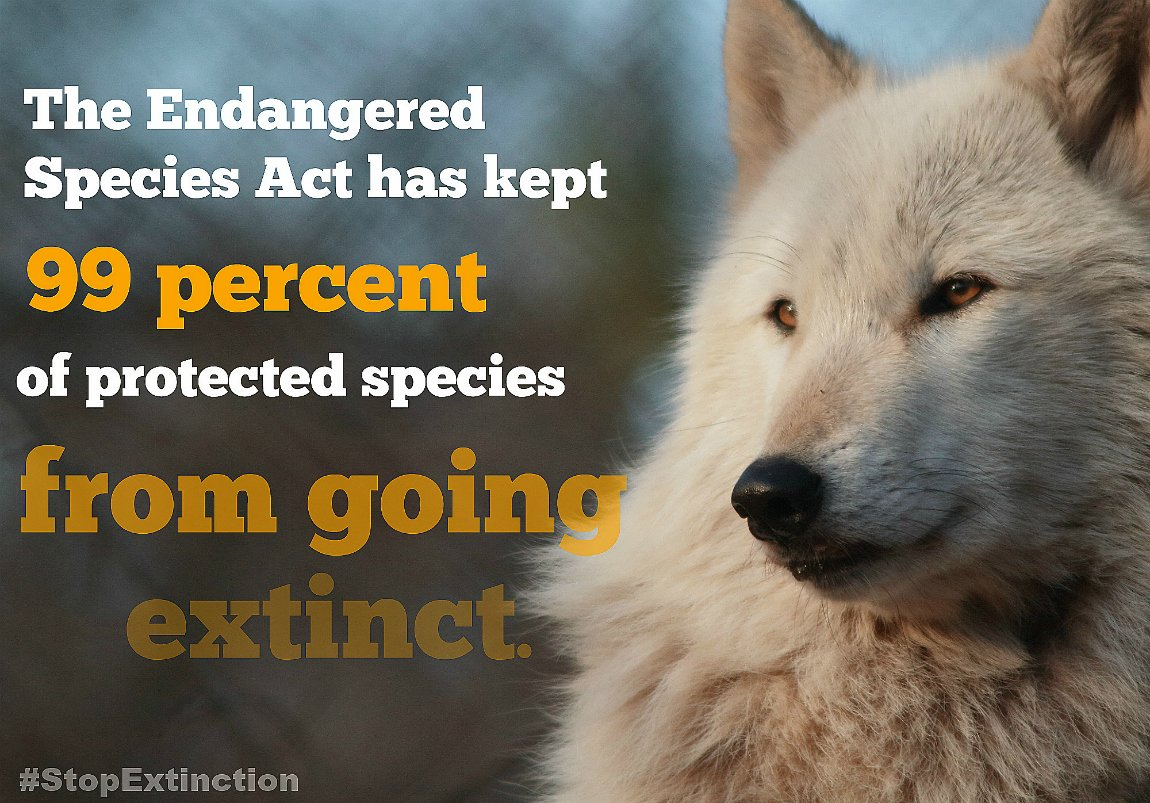 Thank you, @HeatherMorrisTV , for your work to protect the Endangered Species Act!  http:// bit.ly/2xqvcRh  &nbsp;    #StopExtinction #OneActForAll<br>http://pic.twitter.com/PFL4YLWeCw