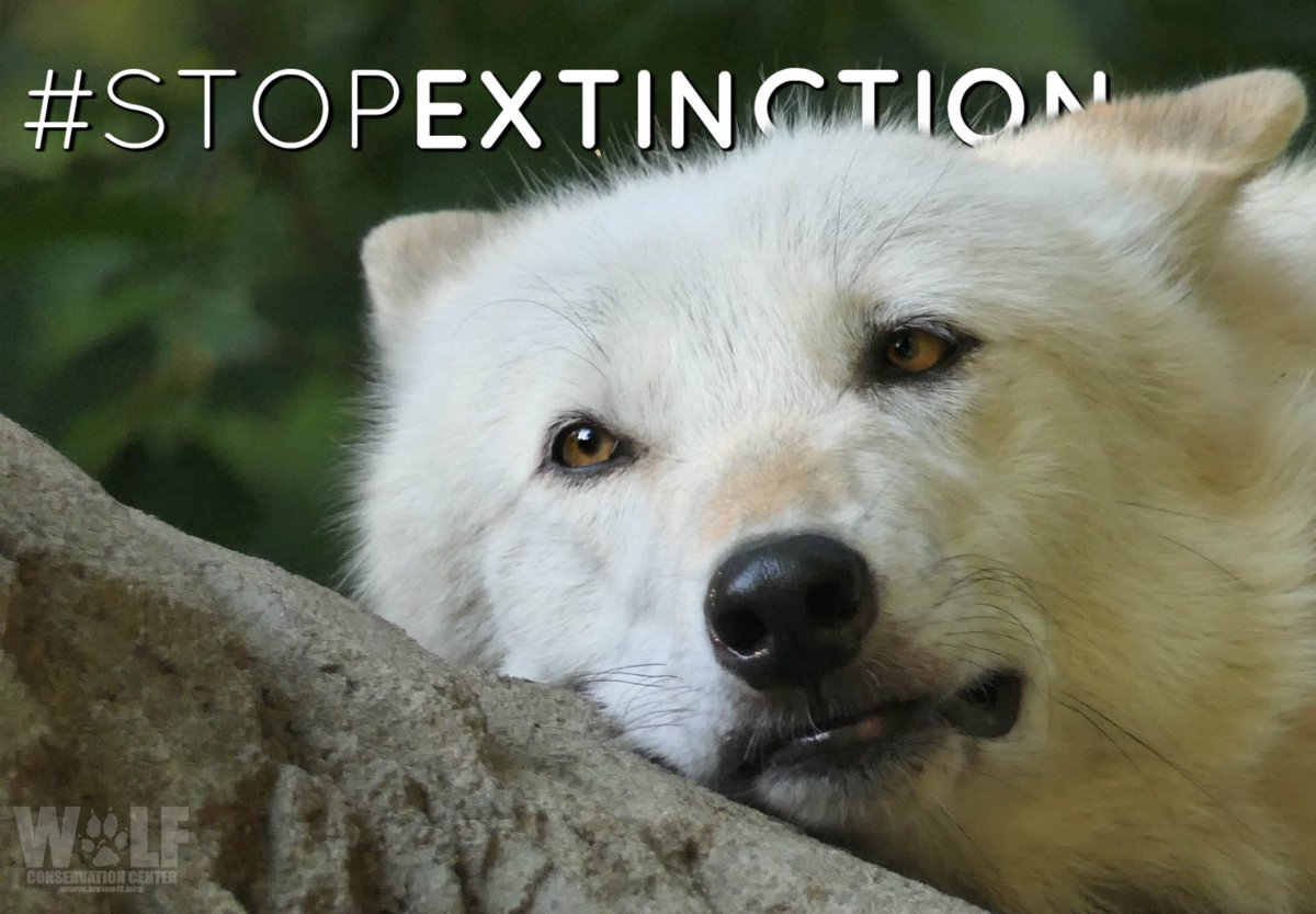 Thanks so much, @CamillaBelle, for your help protecting the Endagered Species Act!  http:// bit.ly/2xqvcRh  &nbsp;    #StopExtinction #OneActForAll<br>http://pic.twitter.com/plCuCeRFQS