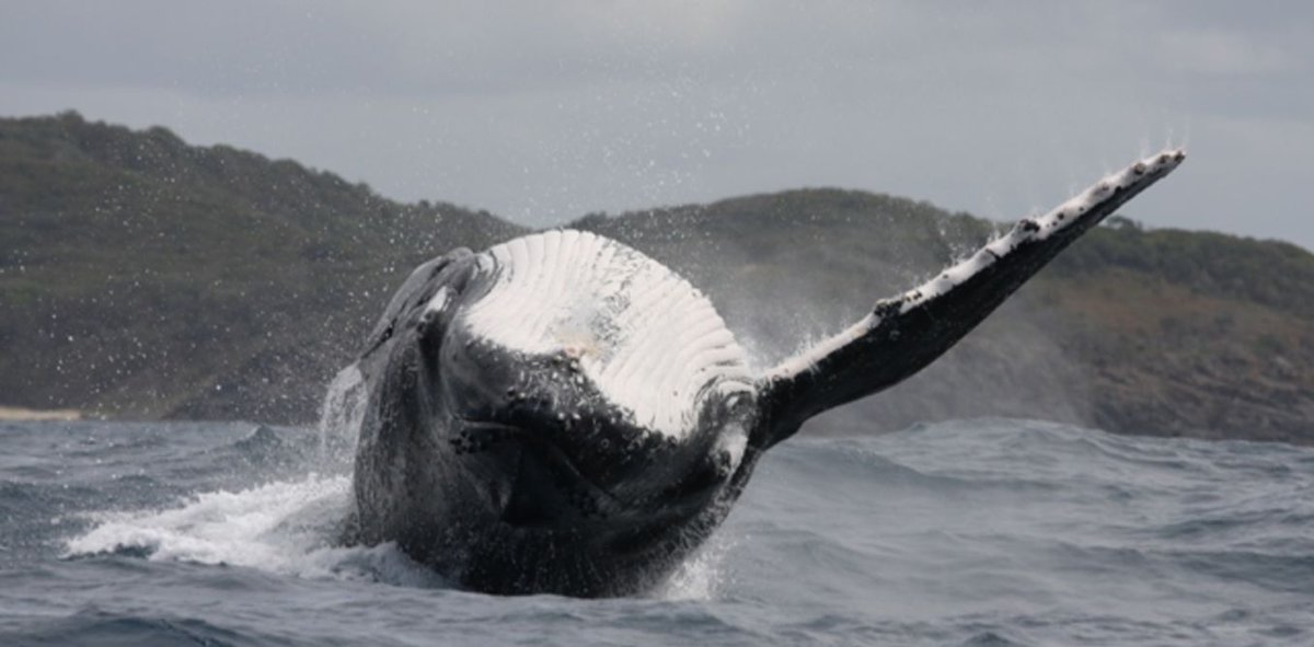 Noise from Oil &amp; Gas can impact whales up to 3km away #marine #sanctuary #ocean #conservation via @ConversationEDU<br>http://pic.twitter.com/YutptITbK6