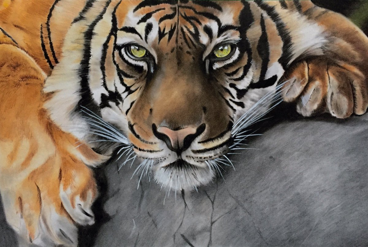 Finally completed the #tiger using @FaberCastell #polychromos pencils on #pastelmat #paper #bigcat #art #wildlife<br>http://pic.twitter.com/wkXV2b8cYP