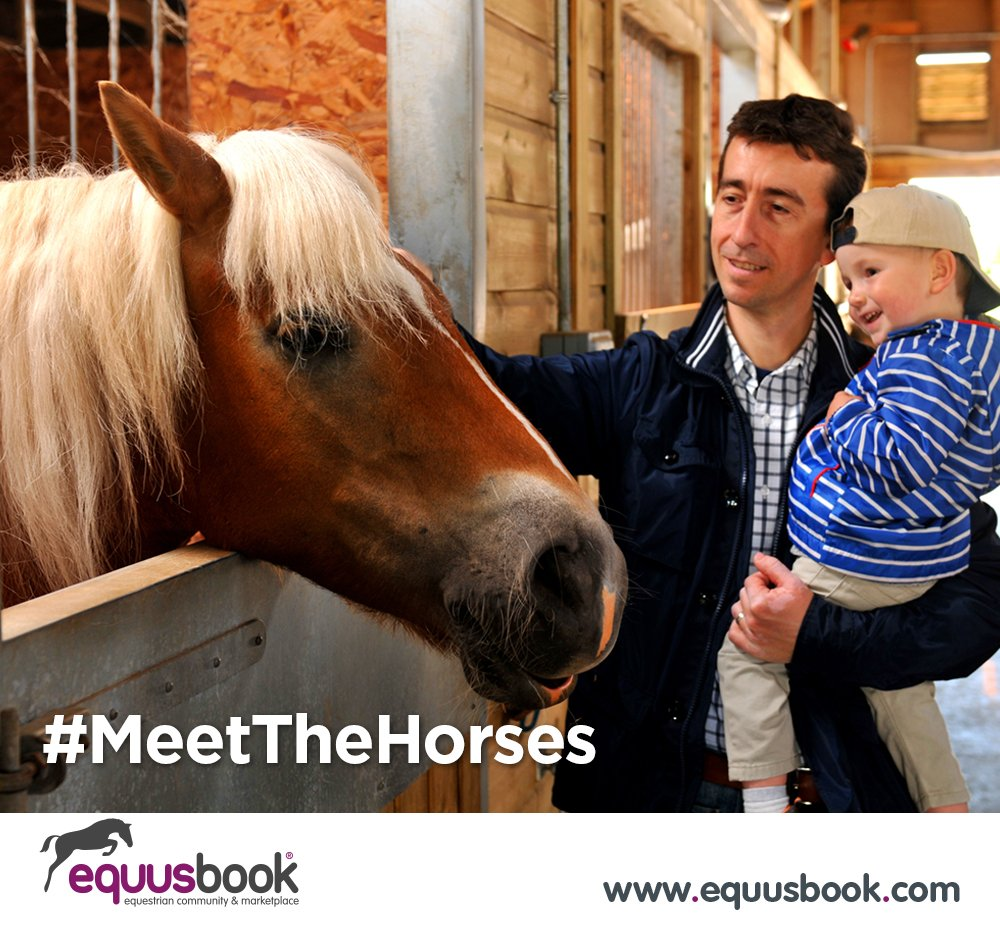 #ThursdayThoughts @hoystweet Visit the &quot;Horse of the Year Show&quot; &amp; Meet the Horses   http:// hoys.co.uk/whats-on/  &nbsp;    #horseHour #EquineHour #Equine <br>http://pic.twitter.com/3JZ4Aw6MnP