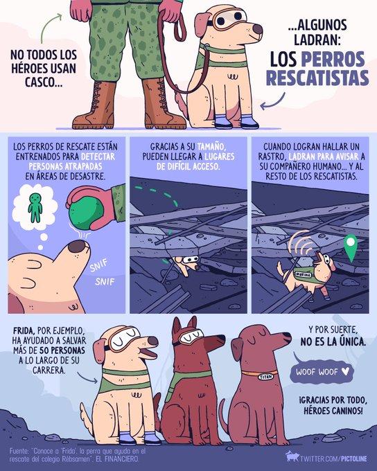 DKRm3eBVwAAqGQu - Frida, a cadela da Marinha mexicana que ajudou no resgate de 56 pessoas