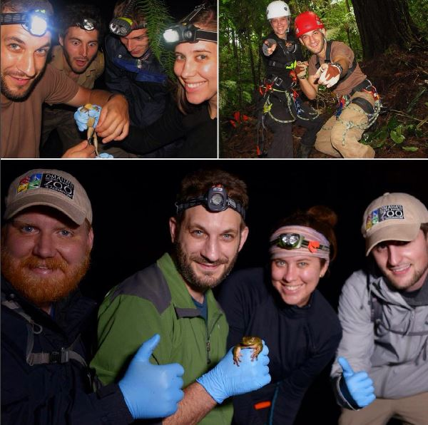 So many amazing #OutdoorsyScientist on our #HARCC team work through the night in the middle of the rainforest! #herpetology #conservation<br>http://pic.twitter.com/Y1PZdeJPvH