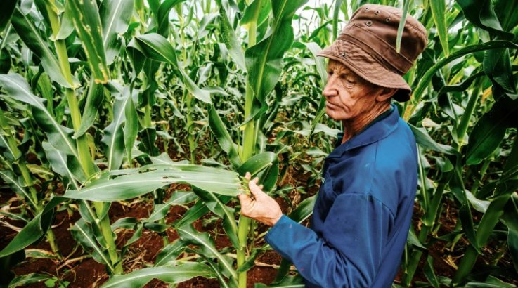 World's 500 million #smallholder #farmers have a new weapon in the fight against #pests &amp; #plant diseases.  http:// bit.ly/2fEs0rD  &nbsp;   #Agtech<br>http://pic.twitter.com/Py8jsSUpQI