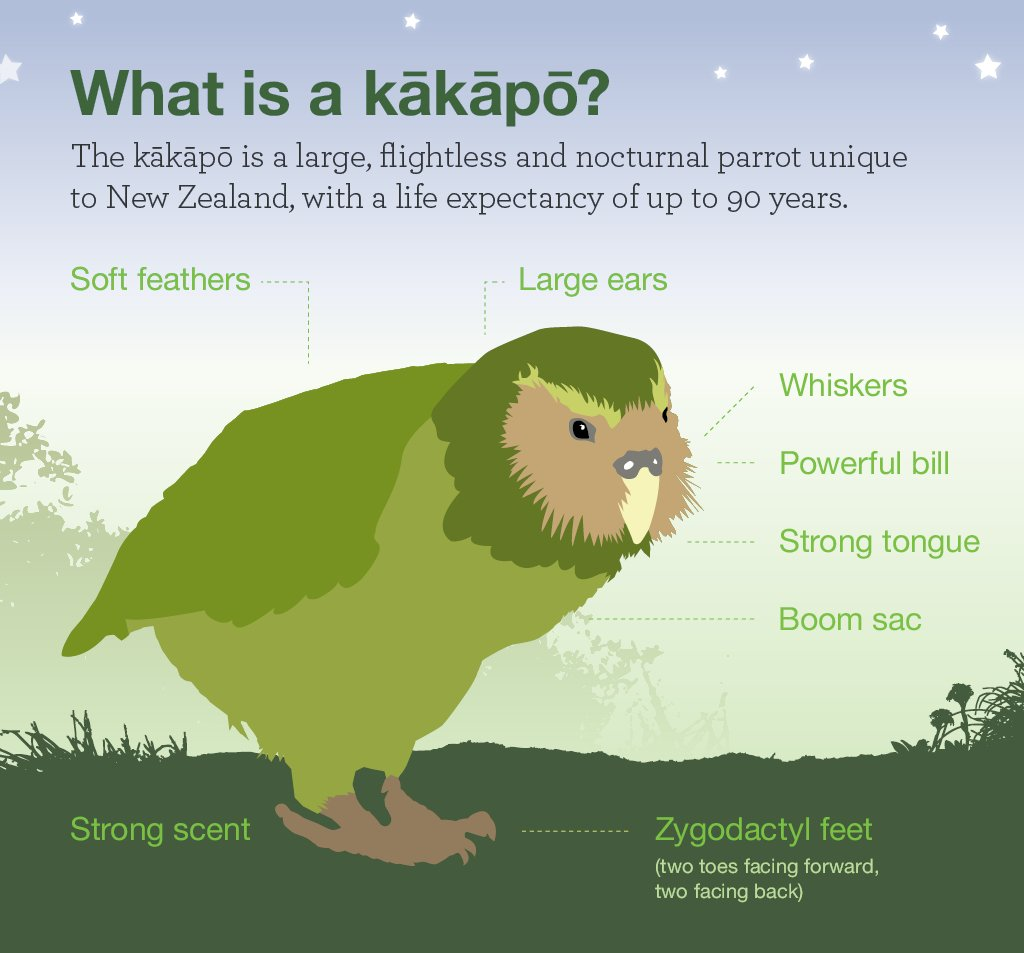 What is a #kakapo? Here are the basics. Find out more at  http://www. kakaporecovery.org.nz  &nbsp;  . #conservation #endangeredspecies #parrots #birds <br>http://pic.twitter.com/Xrh4Jj1bVX