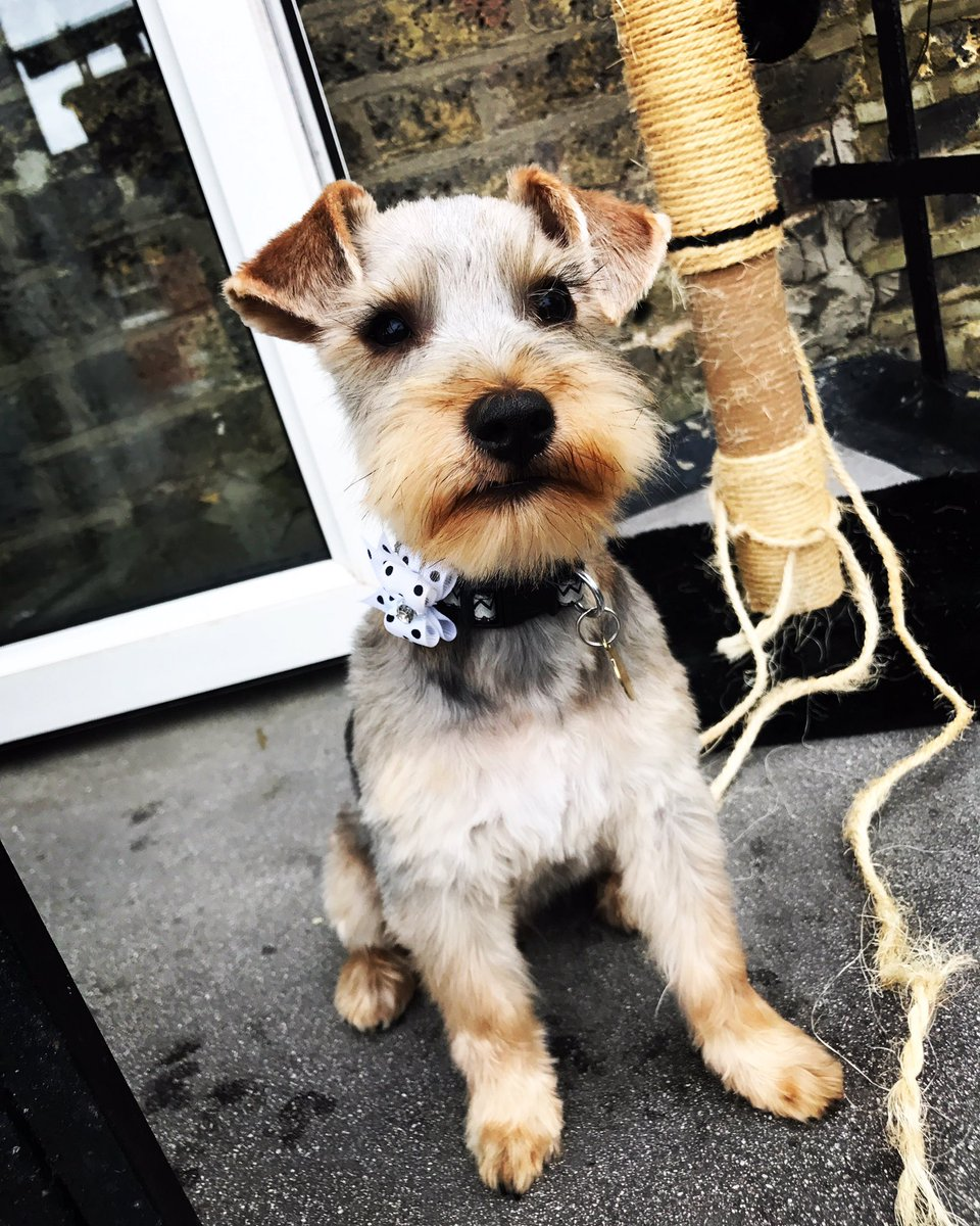 #Jeremy is looking very #dapper today with his brand new haircut! He&#39;s certainly got that #FridayFeeling! #cancer #charity #mascot #puppy <br>http://pic.twitter.com/5asNi8EcrB