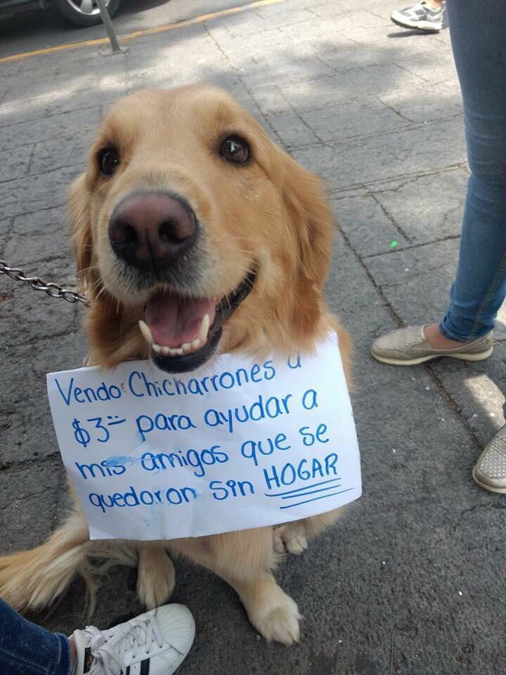 """""""Selling Chicharrones for $3 to help my friends that lost their home from the earthquake""""  #Mexico #FuerzaMéxico #Sismo #dogshelters<br>http://pic.twitter.com/1JoivhWHCS"""