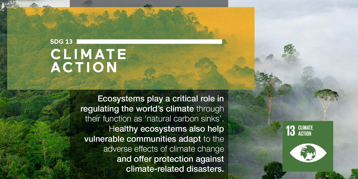 Ecosystems play a critical role in regulating climate and in helping communities adapt  http:// bit.ly/2fi9ZT7  &nbsp;   #GlobalGoalsWeek #SDGs <br>http://pic.twitter.com/jOG0fkfSvQ