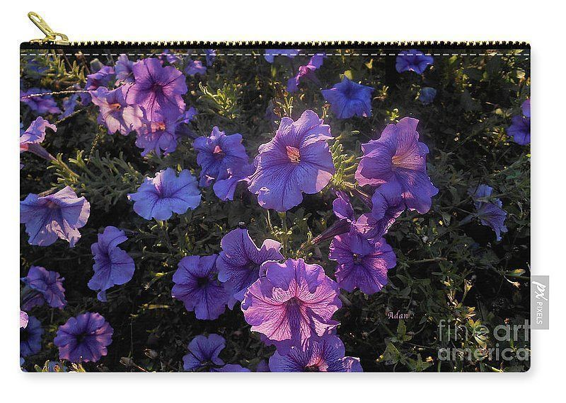 Spring blooms in a Vermont summer :) Tote Bag available @FineArtAmerica  https:// buff.ly/2xRFD1n  &nbsp;   #purple #gardening <br>http://pic.twitter.com/xFTLEQE5pp