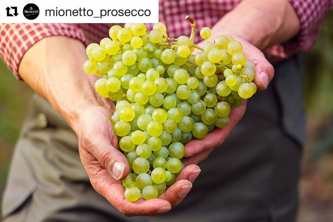 #Buongiorno winelovers da @Mionetto_   A new harvest, the same passion<br>http://pic.twitter.com/eElFtY6Ngk