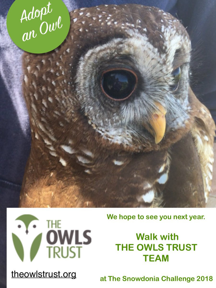 #owlstrust are one of our #charity partners for #s3days 2018 #woodii #owls #fundraising  https:// theowlstrust.org / &nbsp;  <br>http://pic.twitter.com/dU15lhG3QT