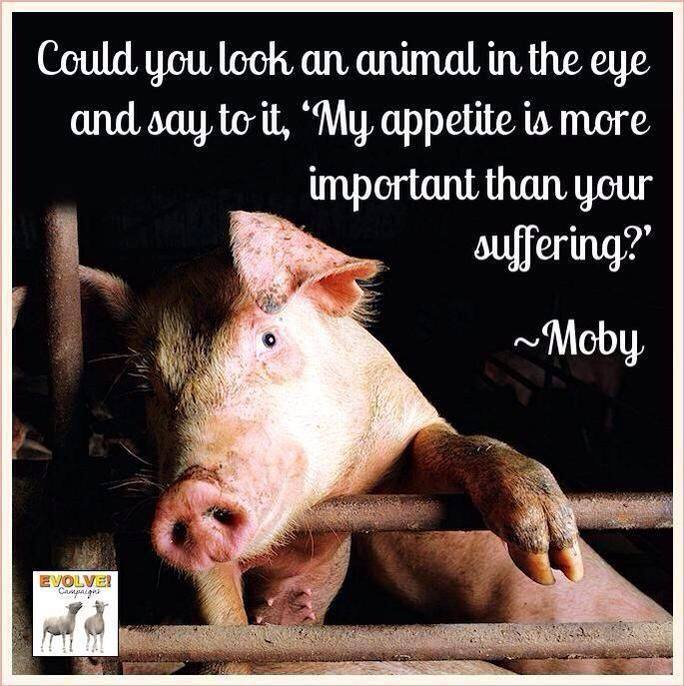 Can you look an animal in the eye and say &quot;My appetite is more important than your suffering?&quot; #vegan <br>http://pic.twitter.com/A1n17MpPhU