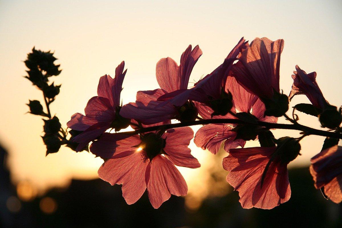 Primavera começa nesta sexta-feira com calor e tempo seco https://t.co/SxxrqnN6tU #G1
