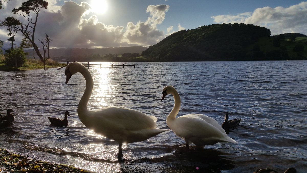 Super #walk @Ullswaterway @LakeDistrictnpa from Pooley Bridge to Howtown, up Hallin #Fell back by @Ullswatersteam ending with #swan #lake :) <br>http://pic.twitter.com/If141okZzh