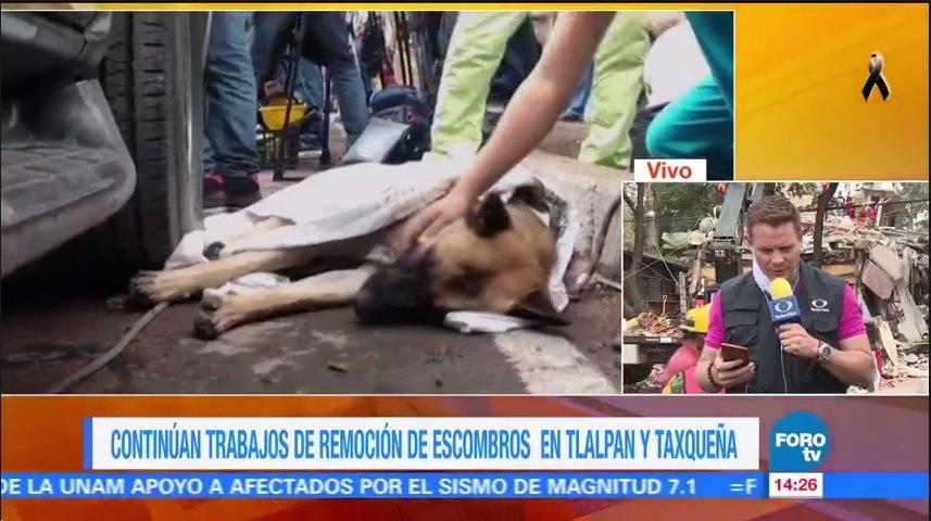 'Titán', perro rescatista recibe atención médica por fatiga https://t.co/D5E0W4x9AQ