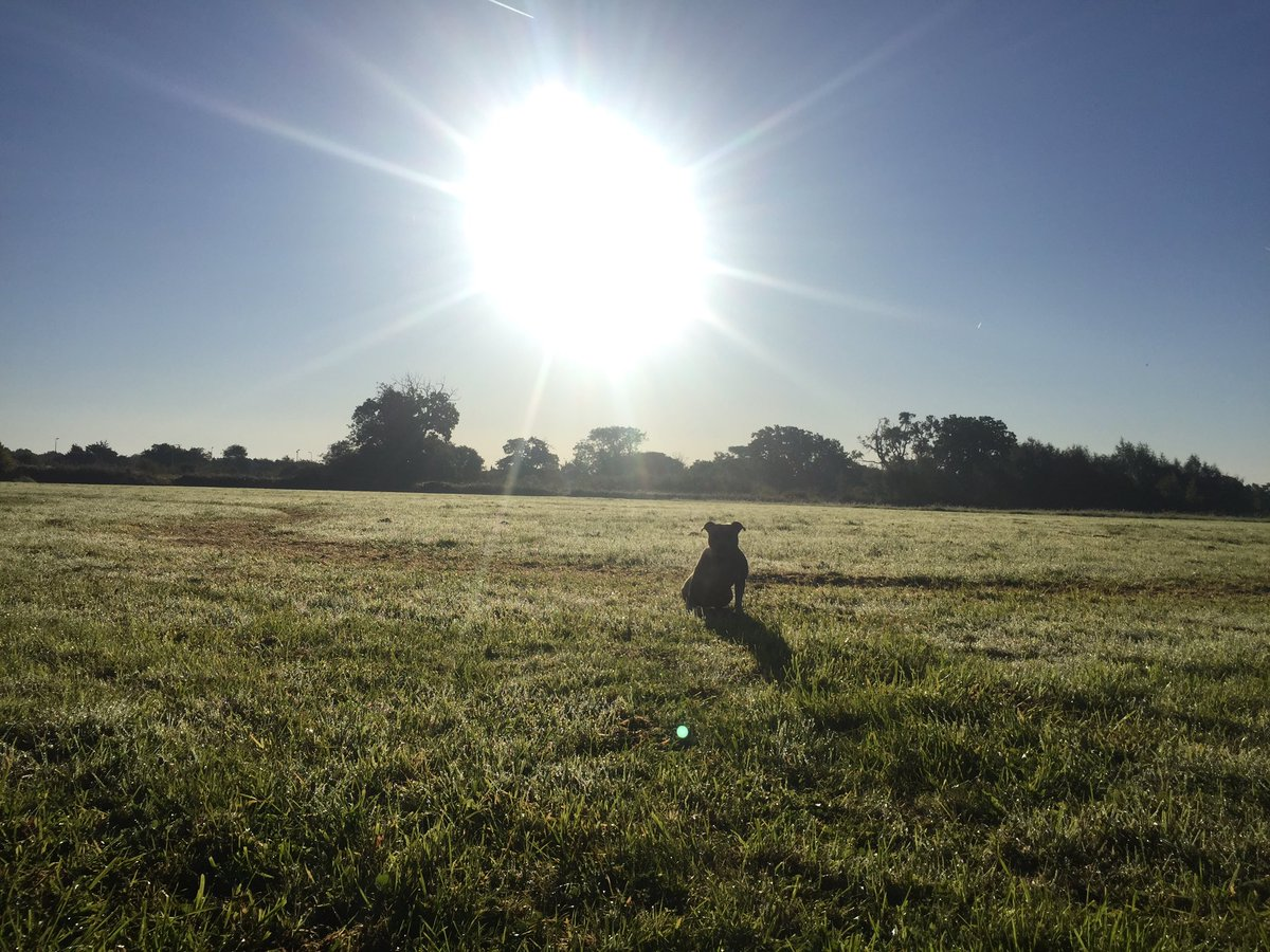 My morning walk :) #sunshine #happypooch #dogsoftwitter<br>http://pic.twitter.com/otmRdw6ZWI