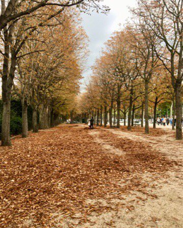 Colorful leaves are covering g the ground changing the landscape. #autumninparis #ChampsElysees <br>http://pic.twitter.com/MFKcOrwG3m