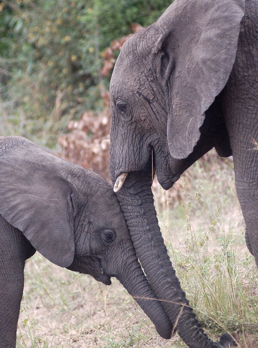 Beautiful love between these two. #ElephantAppreciationDay  #Africa <br>http://pic.twitter.com/1YniVsqciq