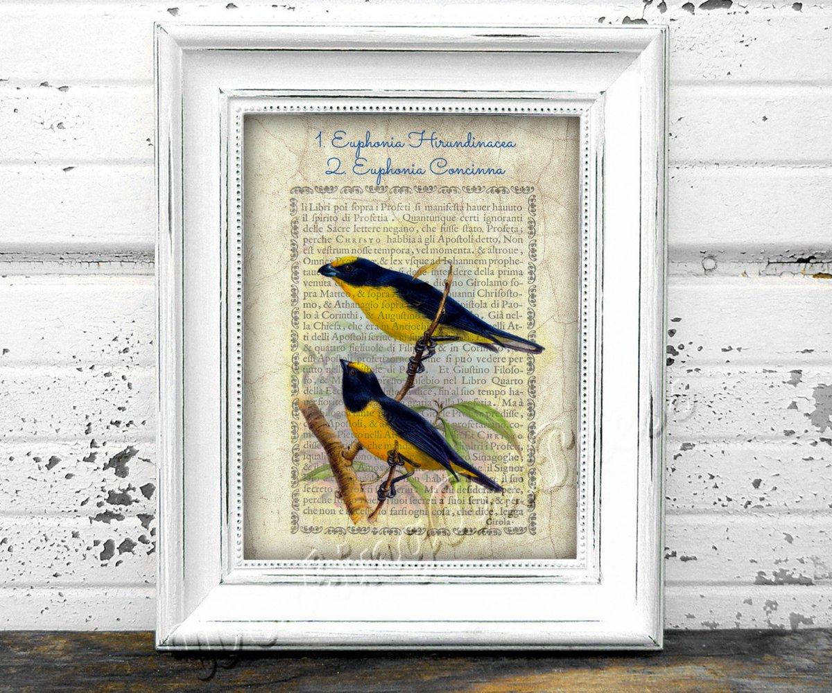 Printable bird wall art lithograph ornithological print Euphonia Hi…  http:// etsy.me/2rGQRDm  &nbsp;   #Etsy #EuphoniaConcinna<br>http://pic.twitter.com/u33gGePah2