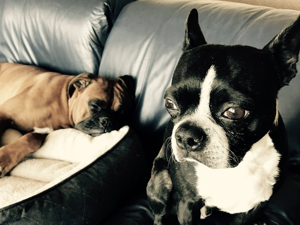 @dogcelebration @PetsNCritters @BoxerBond Happy #1stdayofFALL furfriends #Fall #Autumn #dogs #pets #bostonterriers #boxerdogs #DogLover <br>http://pic.twitter.com/B61AFCQgR5