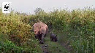 Süßer Anblick zum #WorldRhinoDay!🦏💕 Nashorn Jumana konnte gerettet werden und wurde mit seinem Nachwuchs gesehen! https://t.co/BdTfdPHJ3X