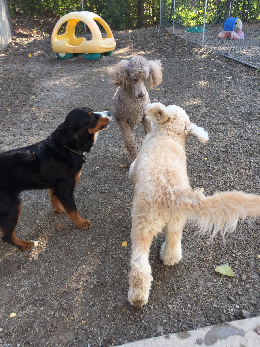 Teddy, Zooey and Riley H. get ready to play