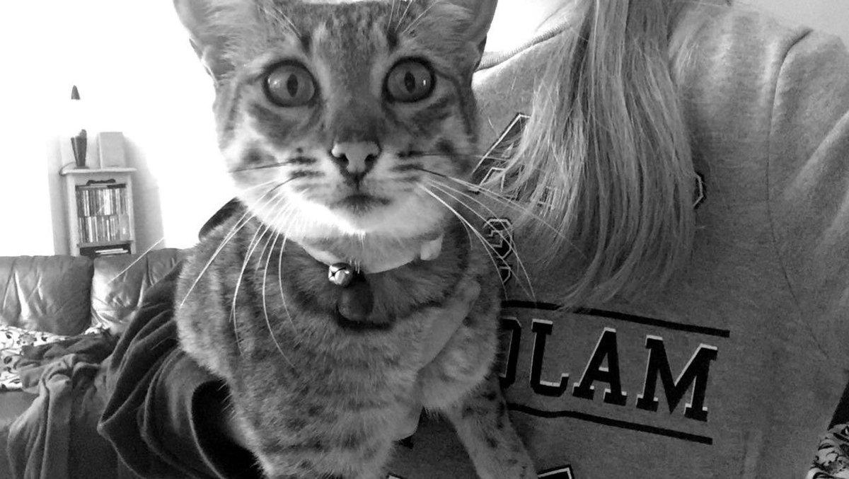 Those eyes #cat #Savannah #love #CatsofTwitter #catlovers #catlover #cats #eyes #cateyes #kieara #aero<br>http://pic.twitter.com/teBYXZ5lcX