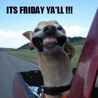 Happy Friday! #undergroundreptiles #tgif #funnymemes #reptiles #pets #snakes #weekend<br>http://pic.twitter.com/odmCMo9Pw3