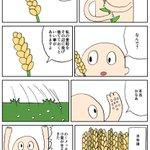 人類が小麦に騙された日(サピエンス全史より) 1/2 pic.twitter.com/qPNRjWa…