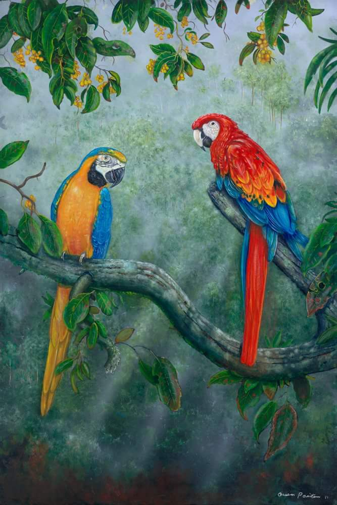 Keep an eye out for Owen N Marg&#39;s new work @RedChairGallery  #cairnsshopping #thepiercairns  #localart #art #tropicalart #birdlife #birds<br>http://pic.twitter.com/fP9FIMTDY3