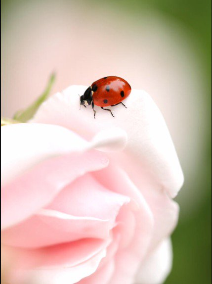 Have A Great #Friday Everyone! #xoxo #happiness #lifestyle #kindness #ladybug #loveanimals #smile<br>http://pic.twitter.com/BGyiz2bVpL