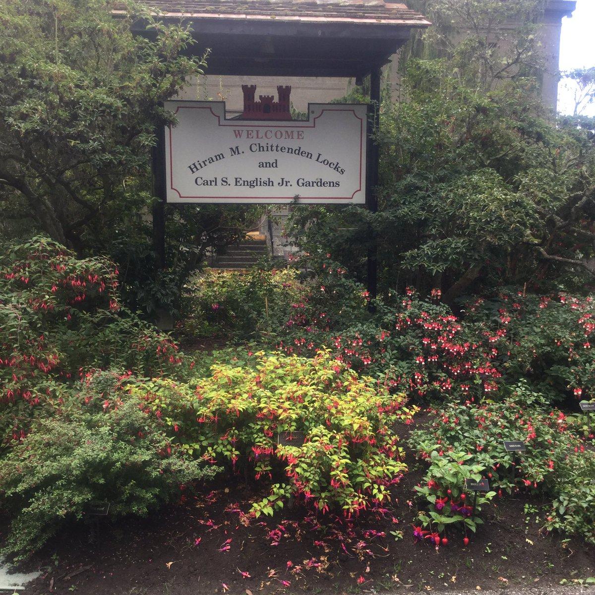 Fun visit to a surprise Seattle garden for #FuchsiaFriday #gardenchat <br>http://pic.twitter.com/oyabBpQi9x &ndash; at Hiram M. Chittenden Locks