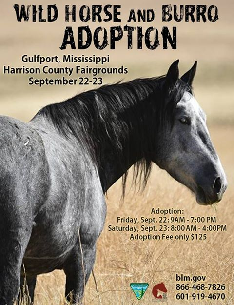 60 #wildhorses and #burros are up for adoption today til 7PM and tomorrow from 8AM til 4PM. Come on out and Give A Horse A Home (or a Burro)<br>http://pic.twitter.com/47HaG8gCfK