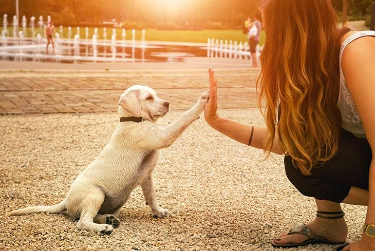 10 Reasons Why #Dogs Can Make Life 100% More Awesome - #PetTrax  https:// buff.ly/2fsWDAm  &nbsp;  <br>http://pic.twitter.com/fgWNkbTw9S
