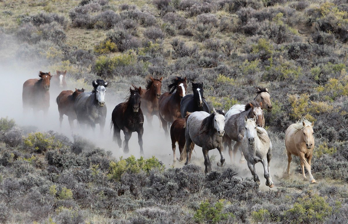 1,560-horse roundup to start as Congress mulls letting BLM kill #wildhorses:  https:// returntofreedom.org/2017/09/22/156 0-horse-roundup-to-start-as-congress-mulls-letting-blm-kill-wild-horses/ &nbsp; … <br>http://pic.twitter.com/xzfHTldaF9