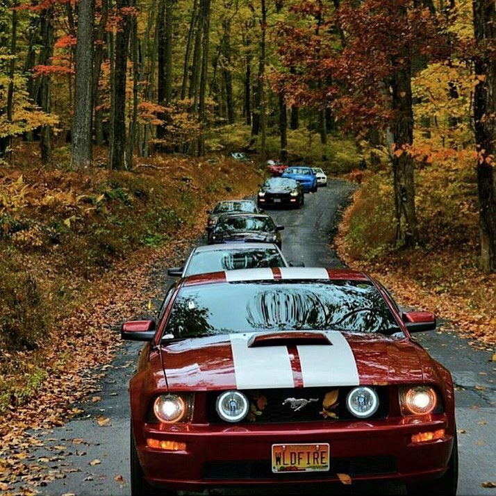 Fall drives have finally arrived  #Ford #Mustang #Fall #CarClub #MustangNation : neonlili<br>http://pic.twitter.com/bK7Ei96ugP
