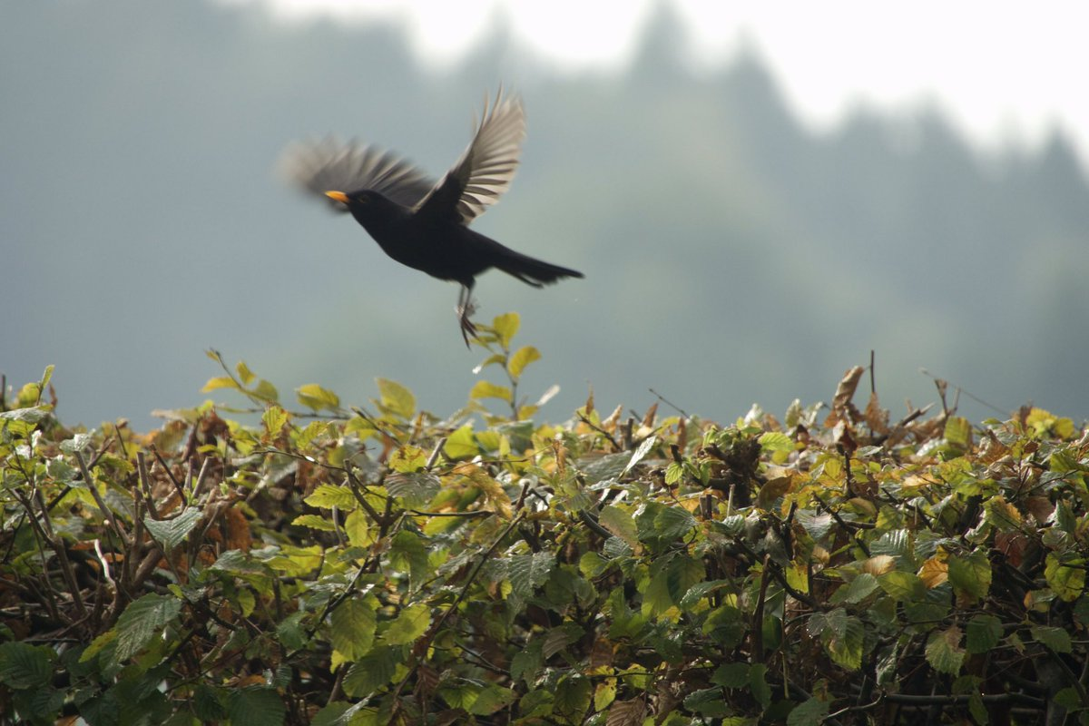 no time for paparazzi   #birds <br>http://pic.twitter.com/YWj3CrAhqd