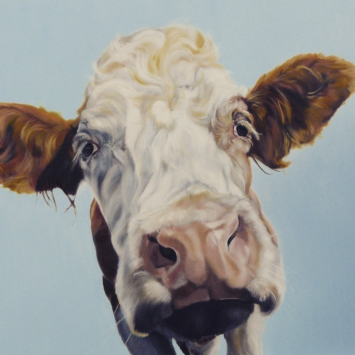 Mini the Moocher #colour_collective #pewterblue  #countryside #artist #animalart #commission #licensing #cowart #farmlife #oil #surreylife<br>http://pic.twitter.com/8OReGIlo2t
